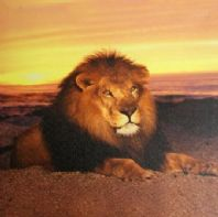 Sunset Lion Picture